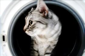 пералня с горно или долно зареждане