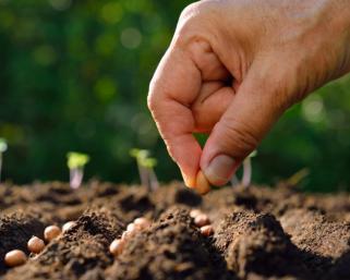 Как да направите една перфектна зеленчукова градина, като започнете от нулата