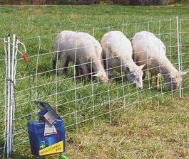 Охрана на посевите и контрол на селскостопанските животни с електропастир – какво трябва да знаете?
