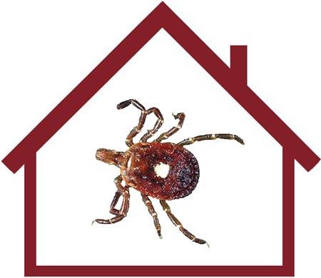 Къде се крият кърлежите във вашия дом?